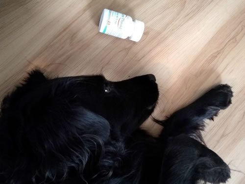 The Dog Ate My Thyroid Medicine